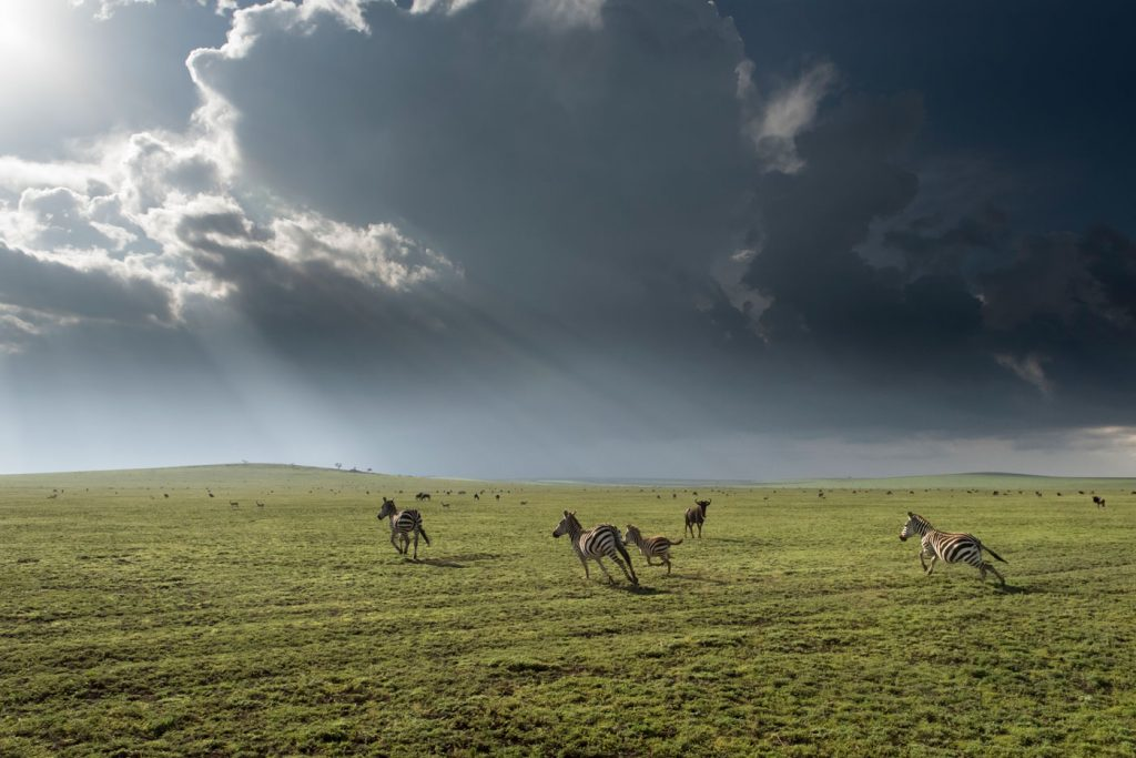The vistas and wildlife of the plains of the Serengeti.
