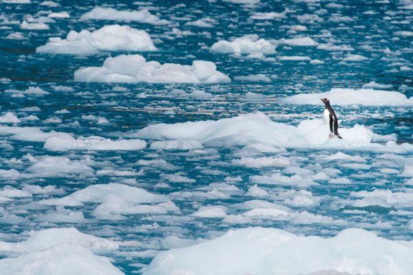 Lost on the ice by Philip Field