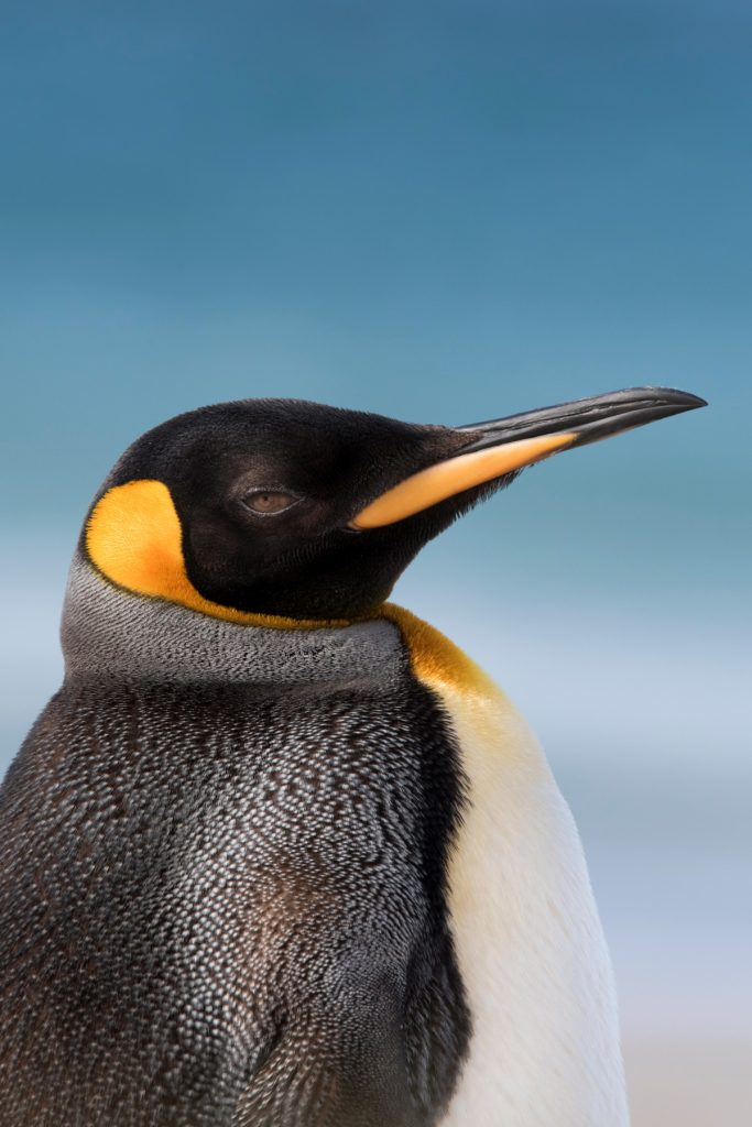 Kind Penguin image