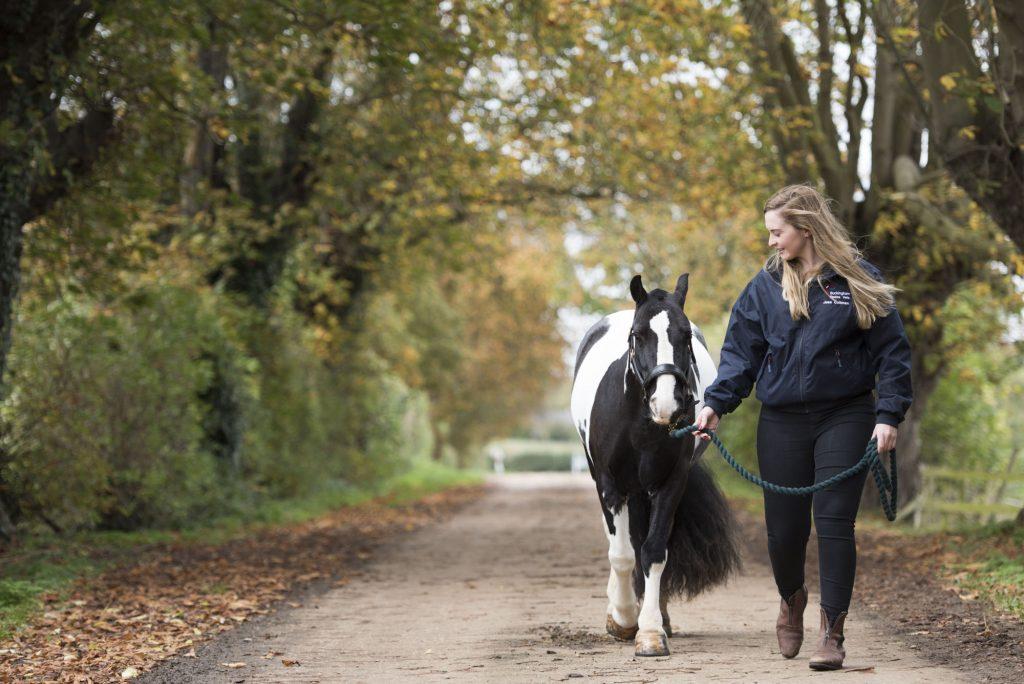 Buckingham Equine Vets - lifestyle image