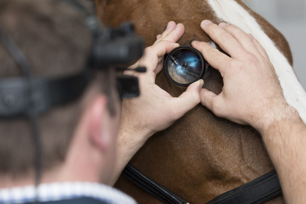 Buckingham Equine Vets - Eye exam image