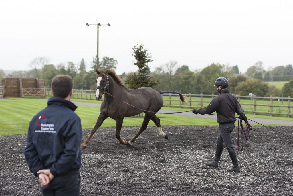Buckingham Equine Vets - lunging image