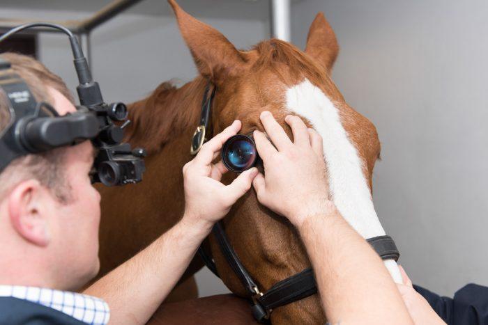 Buckingham Equine Vets - Photography