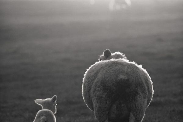 Follow me son, Isle of Bute, Scotland
