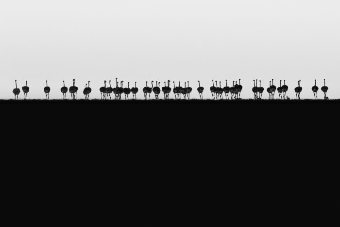 Ostrich Horizon - Winning image from Fujifilm Award for Innovation 2018