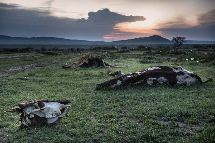 Drought's graveyard, Tanzania